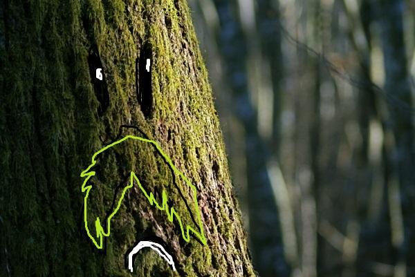 Photos de branches... - Page 2 74185210