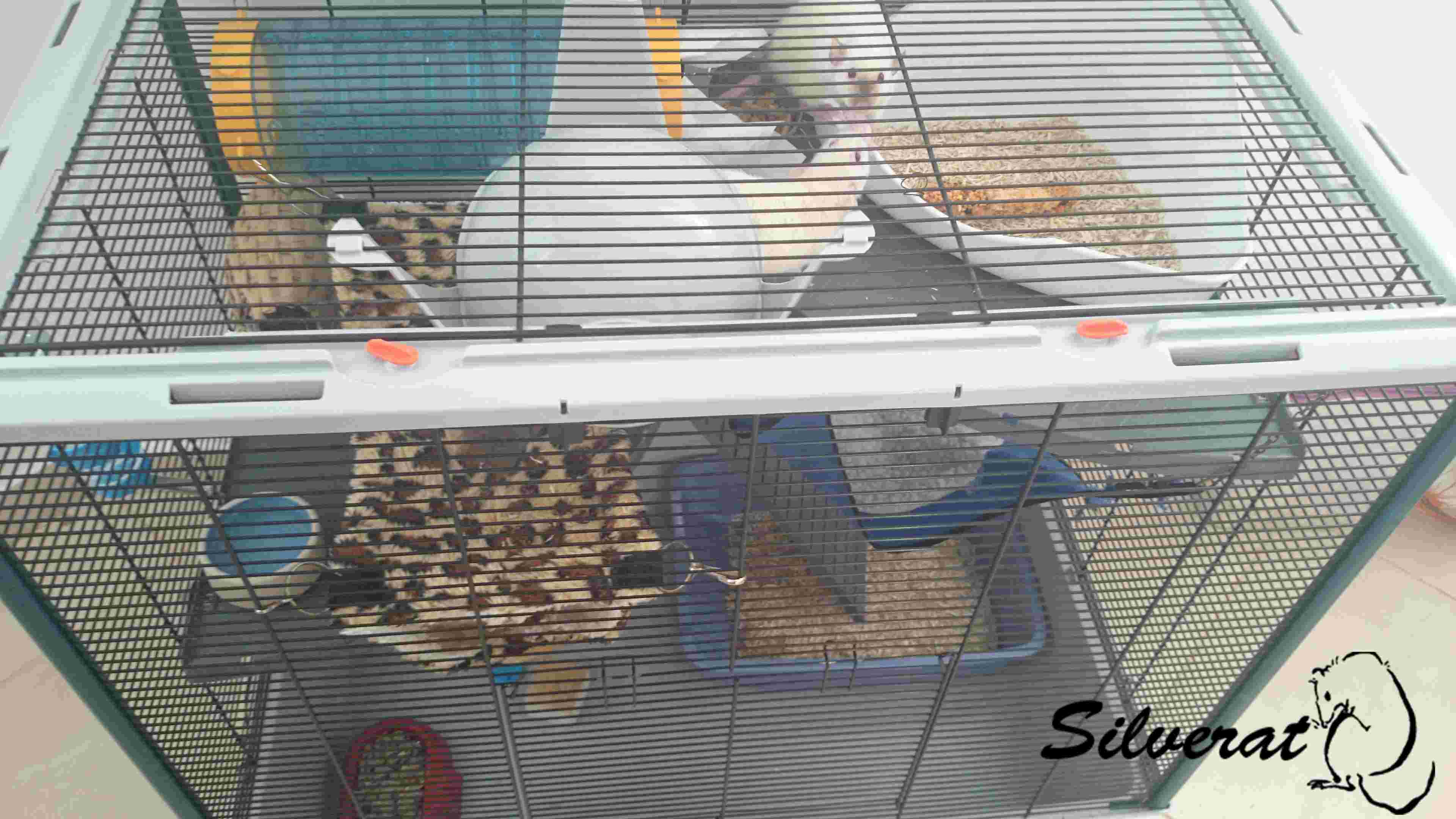 La cage des ratounes Dsc_2311