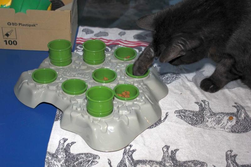 Mes deux chats sont voraces !! Img_4111