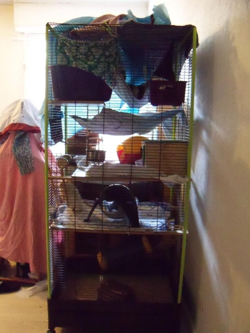 Cage Volière CARLA 1m51 de haut (38) 100_7410