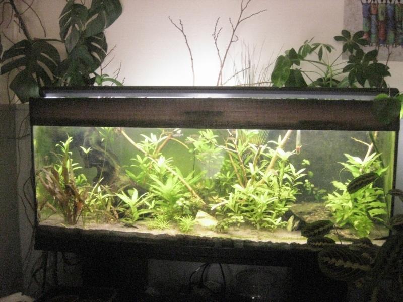 de l' aquarium au riparium B_00410