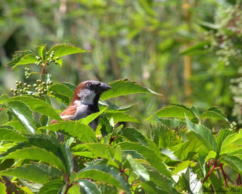 Maubeuge (zoo) Img_2611