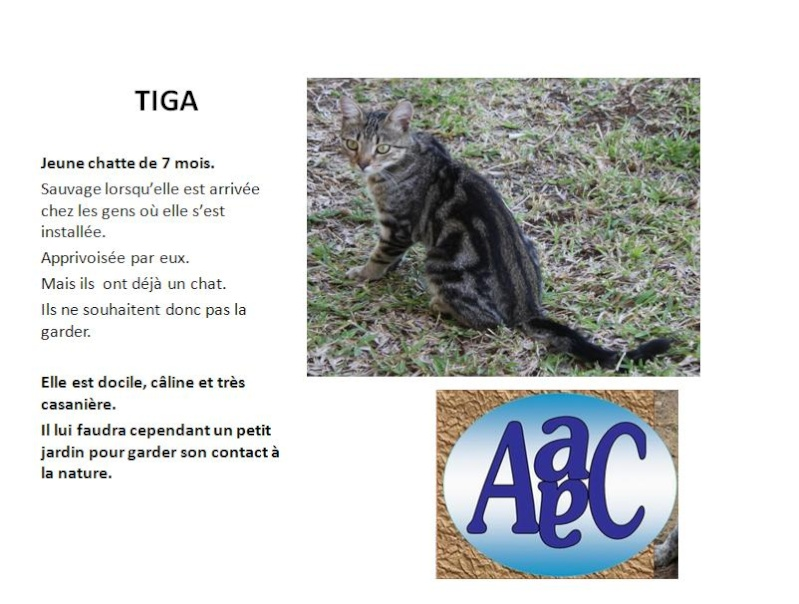TIGA jeune chatte à l'adoption Affich13