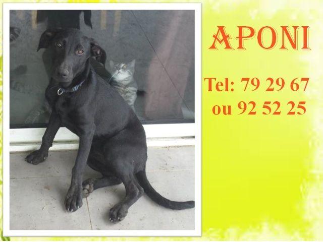APONI 2 mois Aponid10