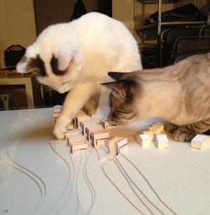 gatos jugando con una maqueta de arquitectura