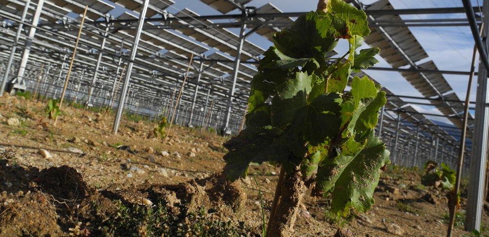 la première centrale agri-voltaïque est en France. La-pre10