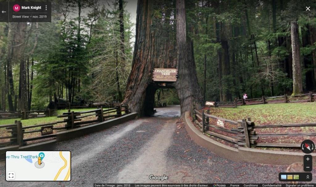 Chandelier Tree - Leggett - Californie - USA Z1222