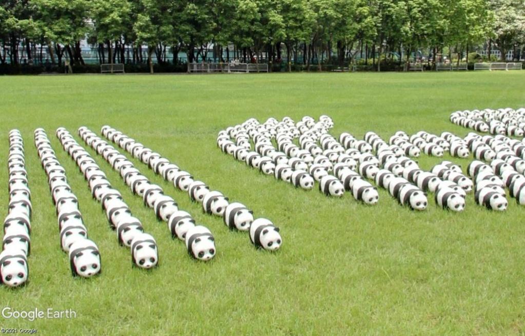 Les oursons de Hong-Kong Z2616