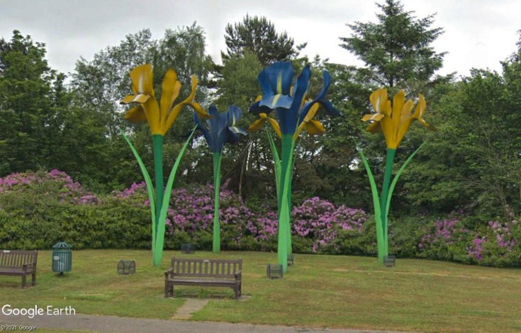 Fleurs géantes - Glenrothes - UK Z919