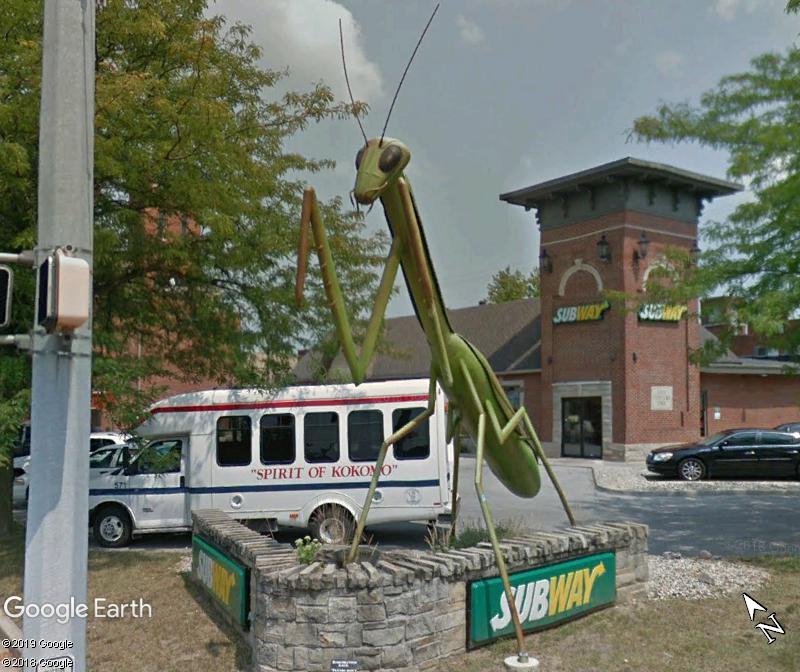 Kokomantis, la mante religieuse de Kokomo - Indiana - USA Zzz139