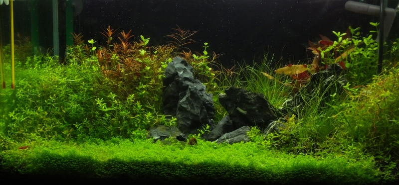 Lancement aquarium 60 litres Dscf3711