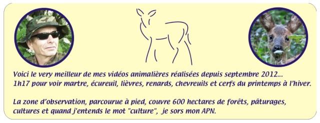 Vidéos animalières... Compil16