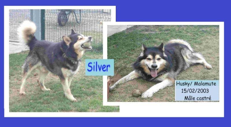 Silver Husky x Mala (m) 15/02/2003 ok femelles REFU29 Tt10