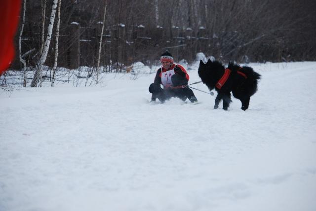 21 февраля 2015 года КУБОК РОССИИ (2 этап) по зимним дисциплинам кинологического спорта. г. Омск Mtaftx10