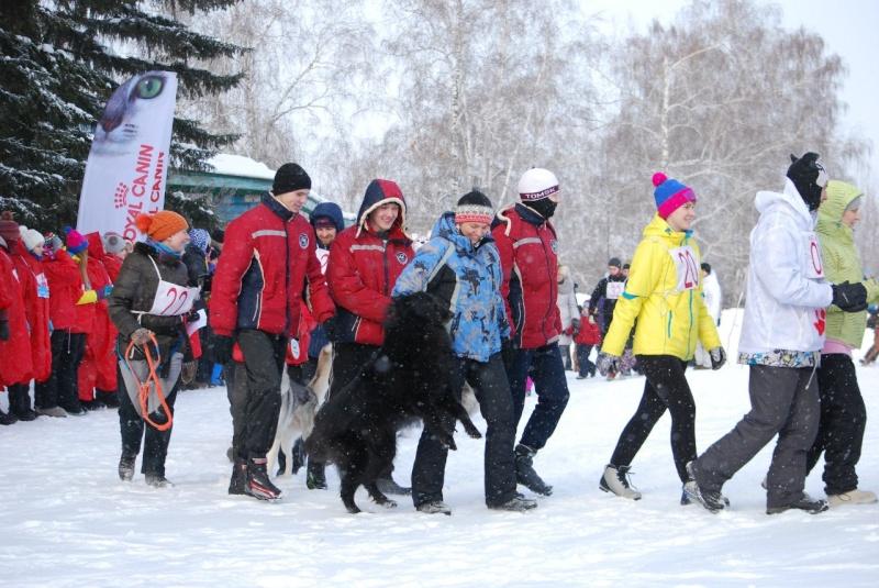21 февраля 2015 года КУБОК РОССИИ (2 этап) по зимним дисциплинам кинологического спорта. г. Омск Waxlkm10