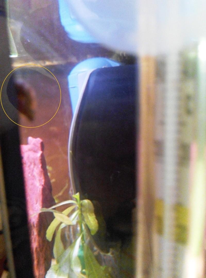 Demande identification escargots 510