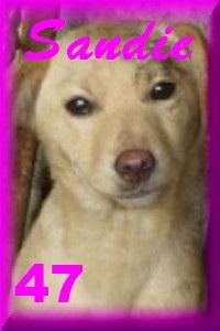 - FOURRIERE DE BACKA : NOUS DEVONS SAUVER LES CHIENS! 1 4711