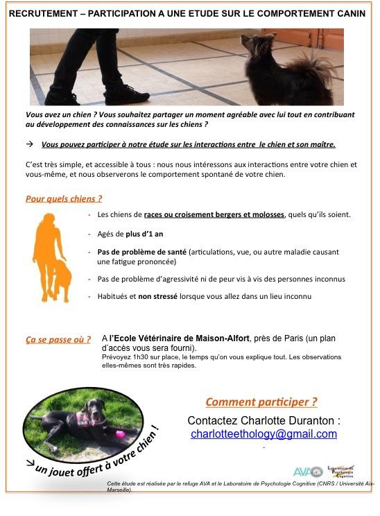Participation à une étude sur le comportement canin Recrut10