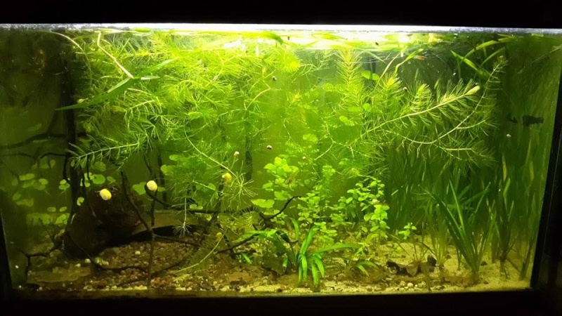 Mes aquariums d'Amérique 11003910