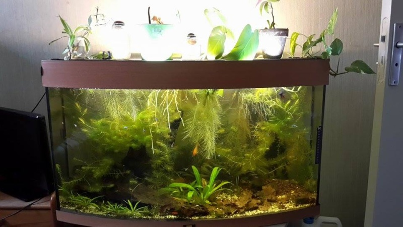 Mes aquariums d'Amérique 11004110