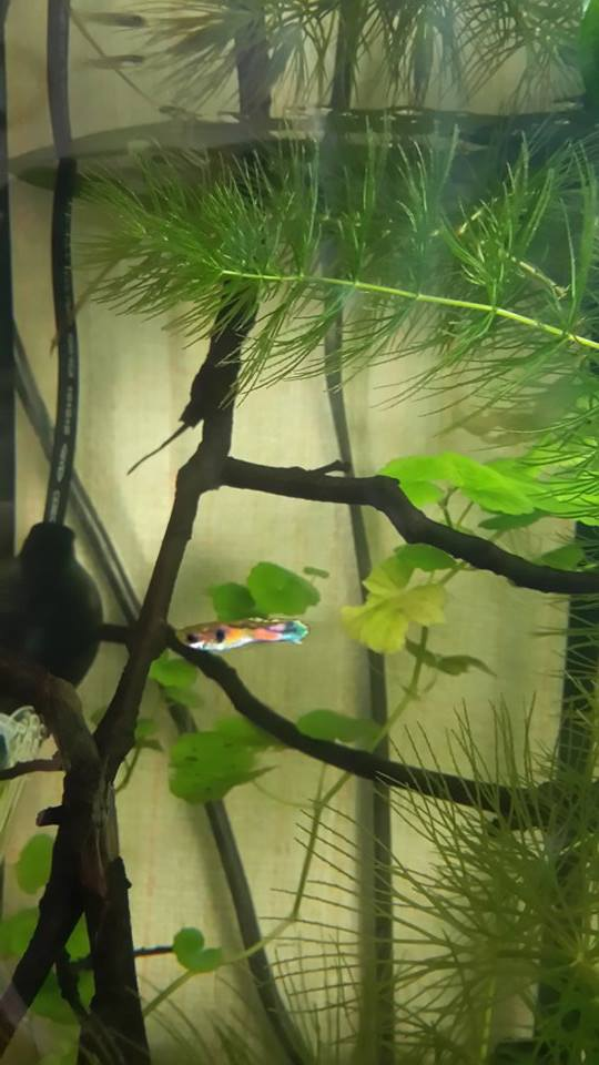 Mes aquariums d'Amérique 11004210
