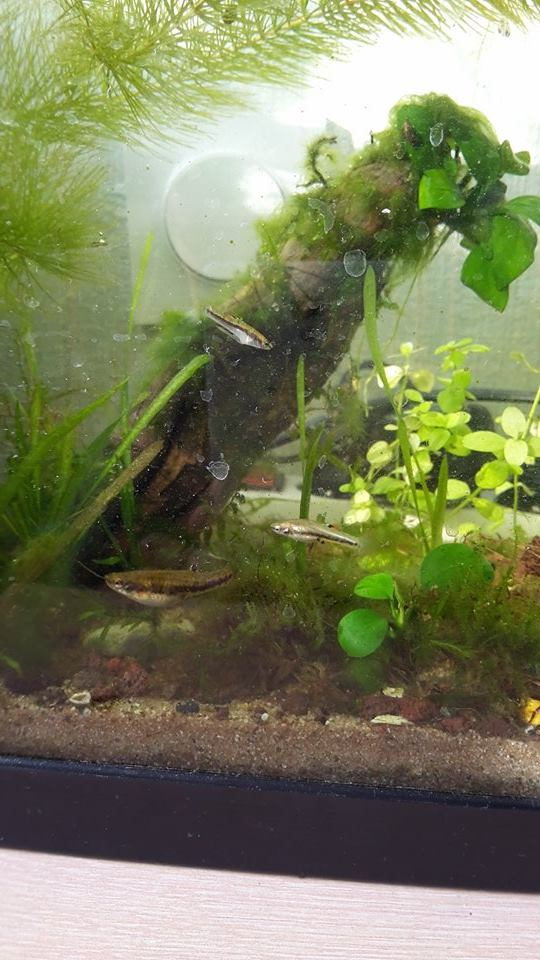 Mes aquariums d'Amérique 11005510