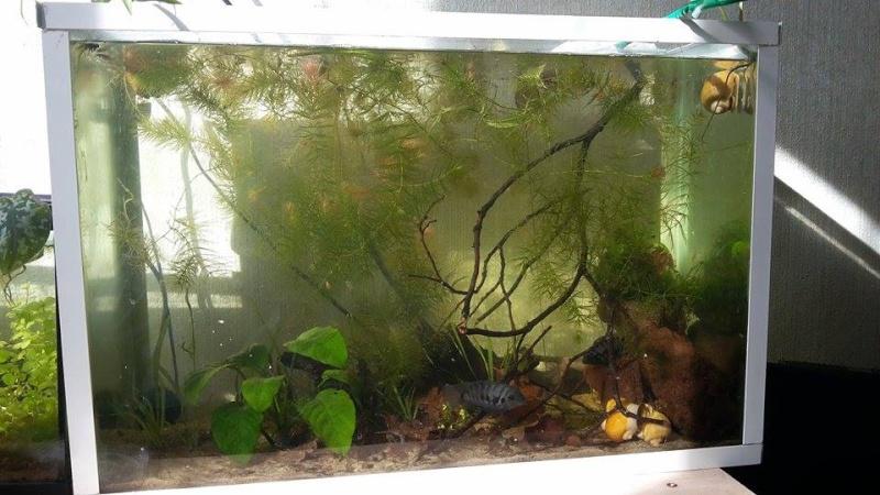 Mes aquariums d'Amérique 11016710