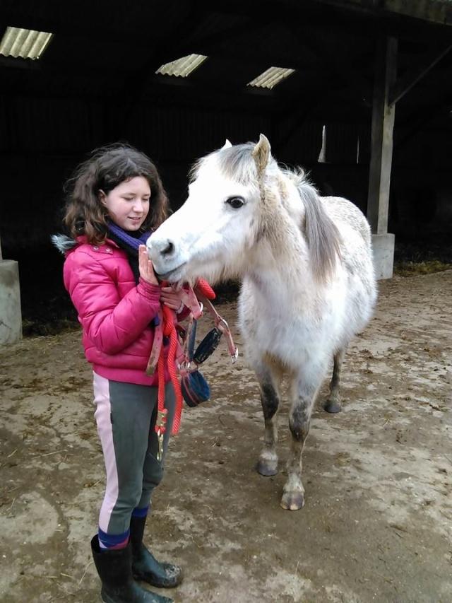 Dpt 50 - KALIF  Poney ONC 13 ans - contact Delphine - adopté par Rodolphe Janvier 2015 14996010