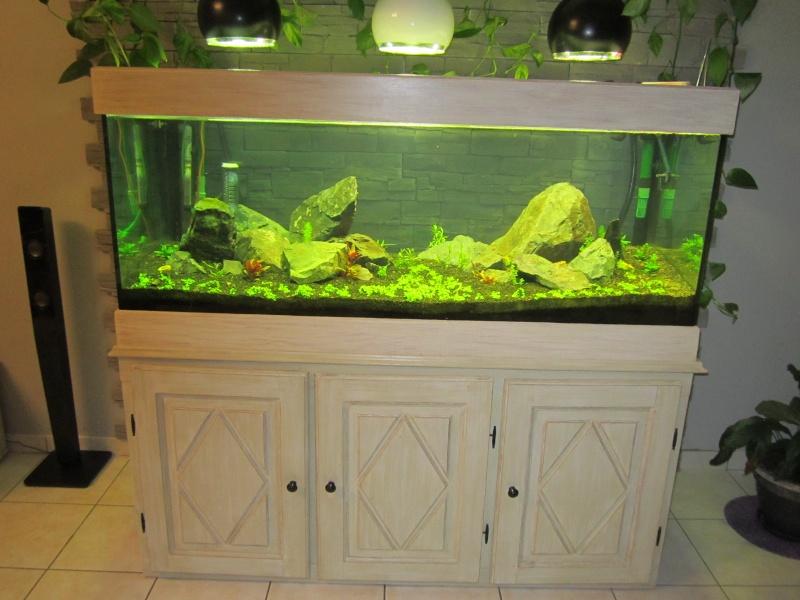 Réfection de mon aquarium  Img_0510