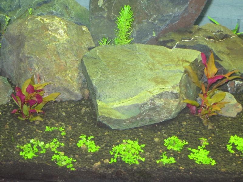 Réfection de mon aquarium  Img_0512