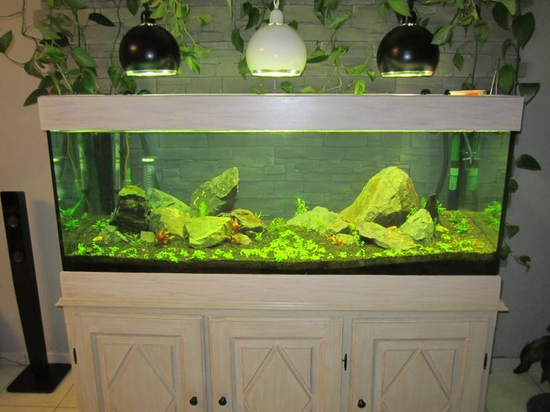 Réfection de mon aquarium  Img_0515