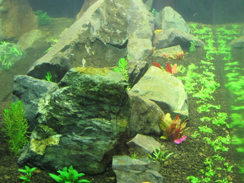 Réfection de mon aquarium  Img_0516