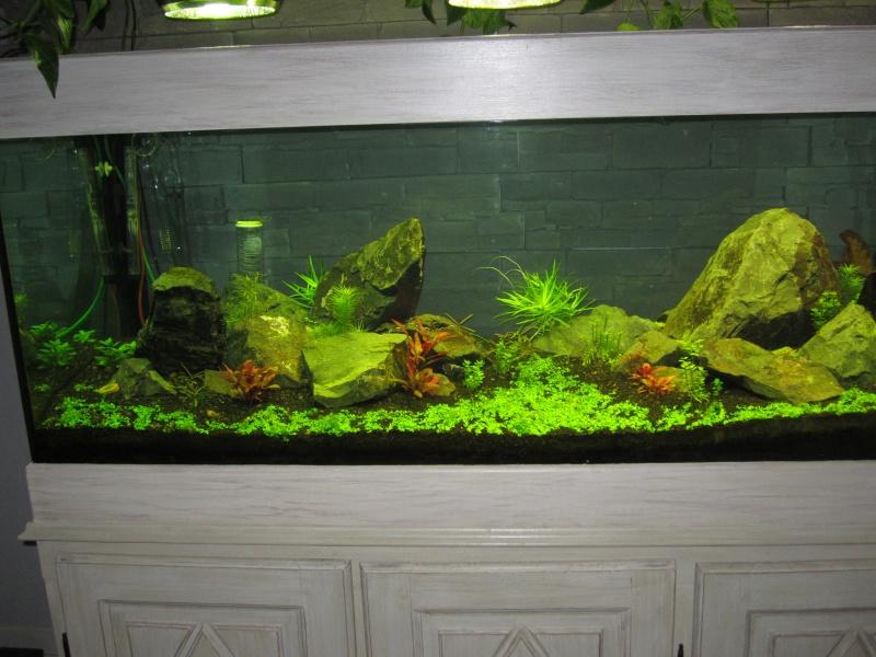 Réfection de mon aquarium  Img_0517