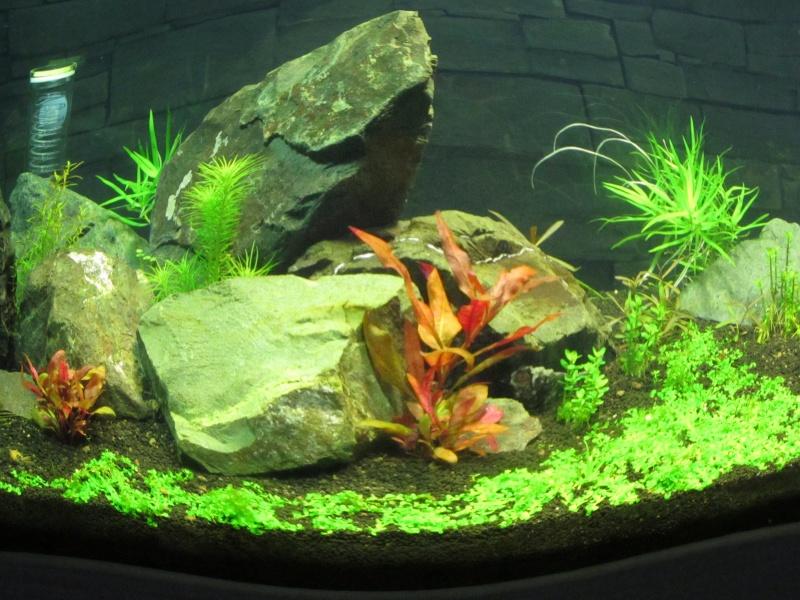 Réfection de mon aquarium  Img_0518
