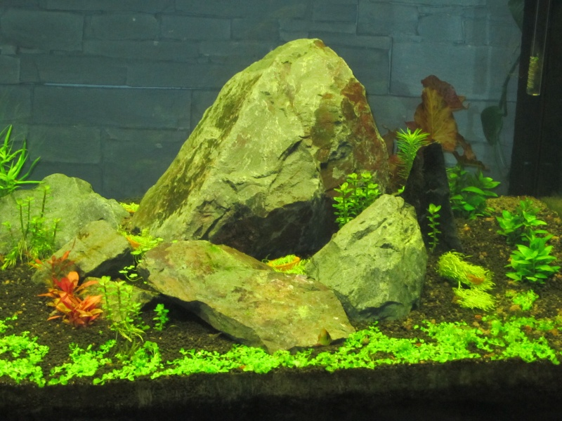 Réfection de mon aquarium  Img_0519