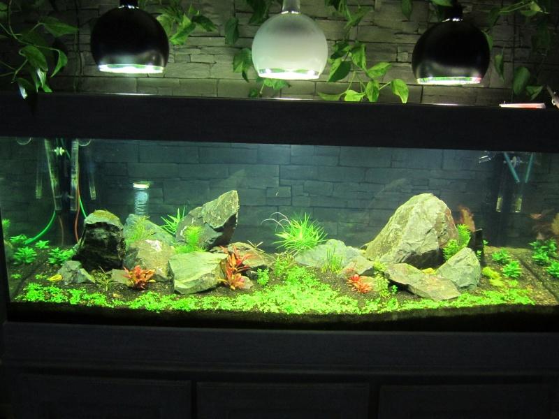 Réfection de mon aquarium  Img_0520