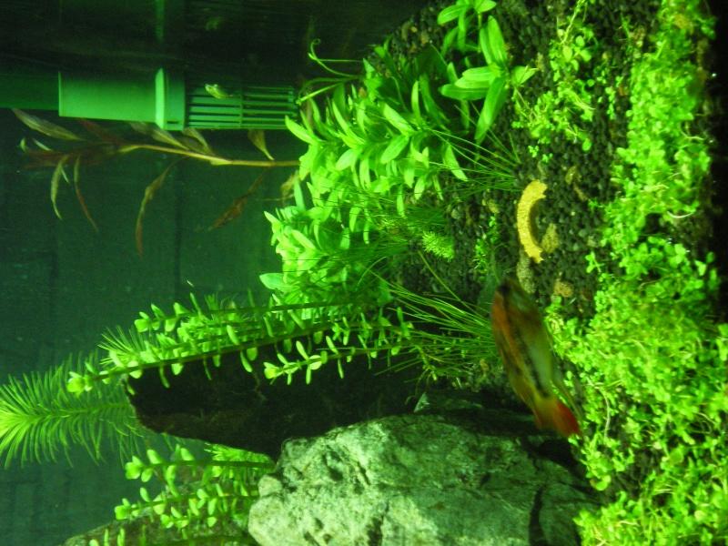 Réfection de mon aquarium  Imgp0913