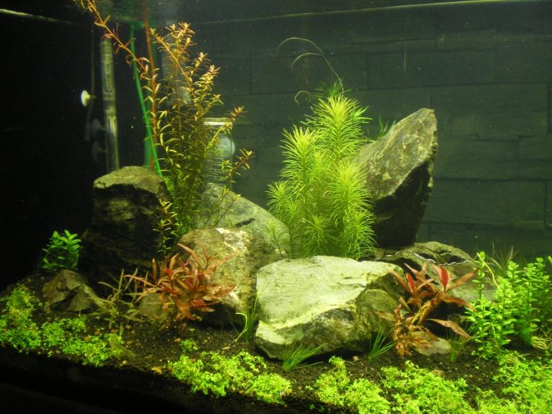 Réfection de mon aquarium  Imgp0914
