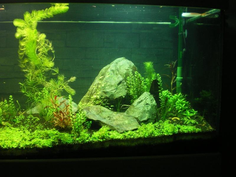 Réfection de mon aquarium  Imgp0915