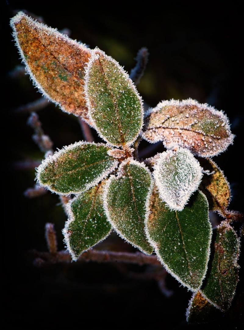 C'est l'hiver Nft_8016