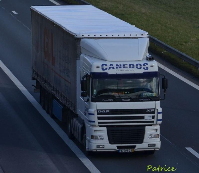 Canedos Dsc_2511