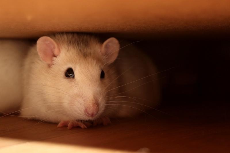 Les RatsCapables de Titia ! - Page 10 Img_7813