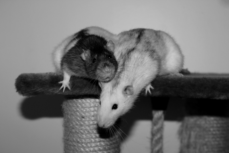 Les RatsCapables de Titia ! - Page 10 Img_8214