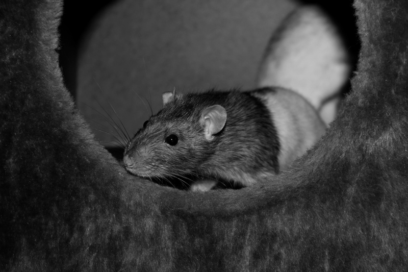 Les RatsCapables de Titia ! - Page 10 Img_8215