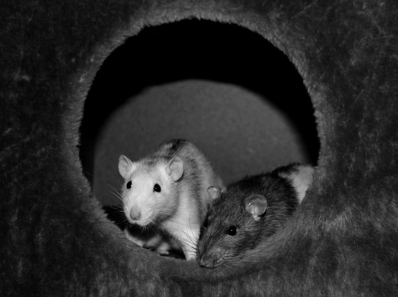 Les RatsCapables de Titia ! - Page 10 Img_8216