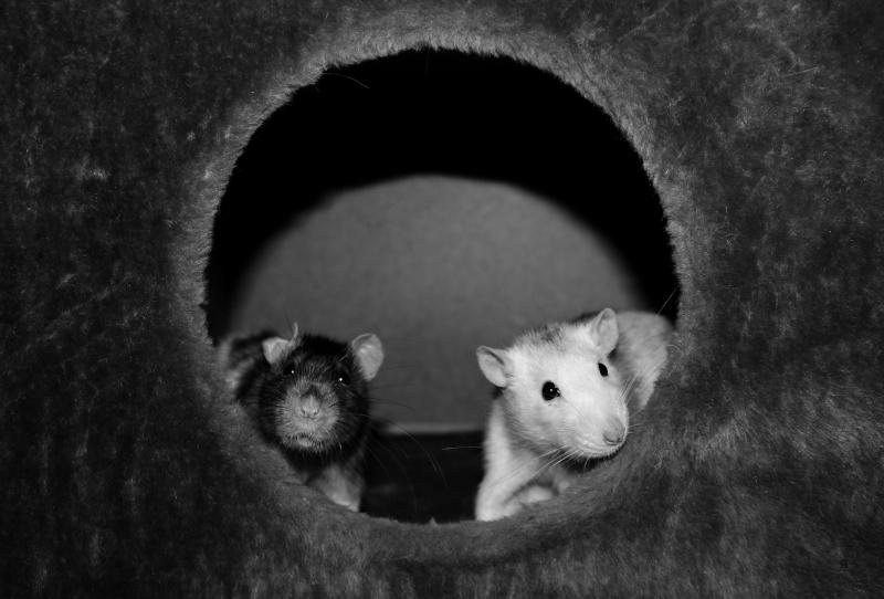 Les RatsCapables de Titia ! - Page 10 Img_8217