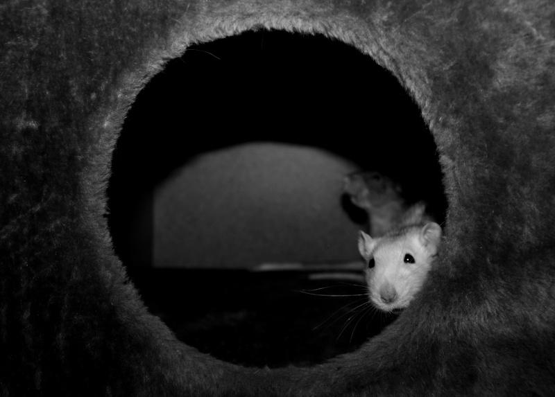 Les RatsCapables de Titia ! - Page 10 Img_8218