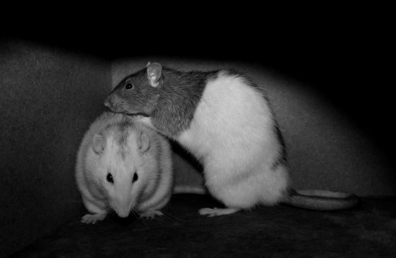 Les RatsCapables de Titia ! - Page 10 Img_8219
