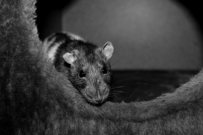 Les RatsCapables de Titia ! - Page 10 Img_8222