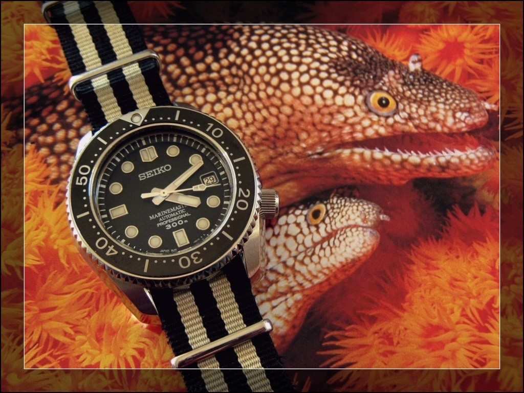 La montre du vendredi 30 janvier Rtimg_36